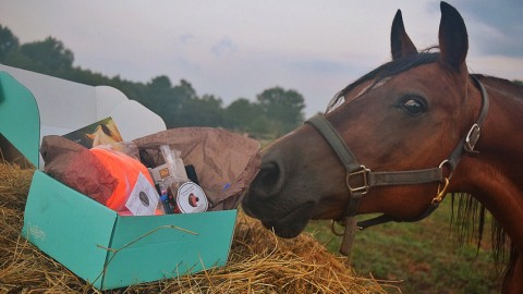 The Gift Box of Happiness for Horses and Humans