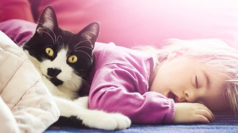 5 Simple Ways To Transition Your Cat To Live With A New Baby In The House